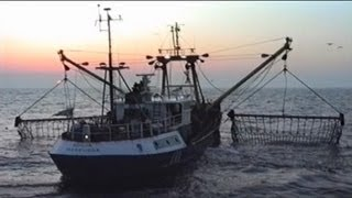 Beam Trawl Selectivity: Project SOBETRA (1996)