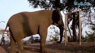 Können Elefanten denken?