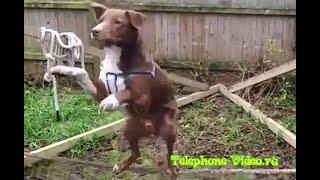 Собака на канате