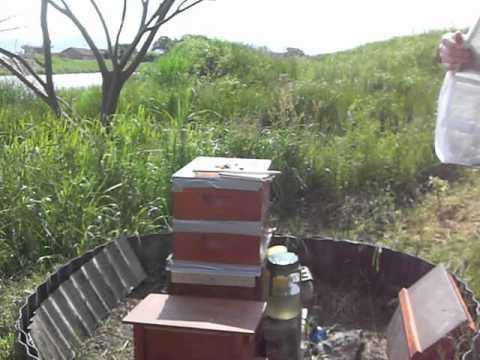 Beekeeping Japan April 2012 -- a clueless beekeeper tying to help #SaveOurBees