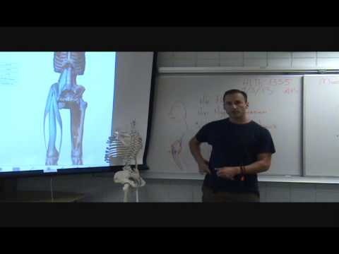 Rooting the Femur v.s. Hip Hyperextension in Anusara Asana Anatomy
