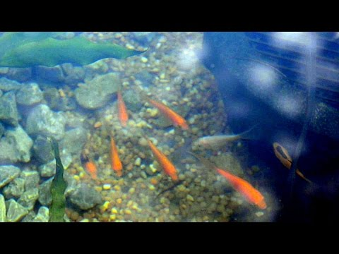Cheap and easy portable fish pond a good source of or for Cheap pond fish