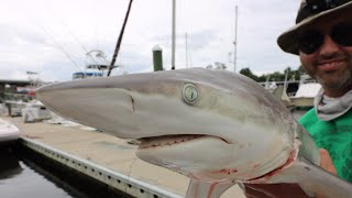 (GRAPHIC! ) Catch and Cook : Blacktip Shark - Blackened, Smoked and Grilled!