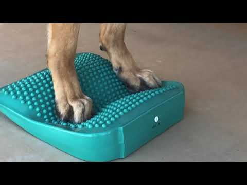 FitPAWS Balance Ramp Exercise for Tripawds