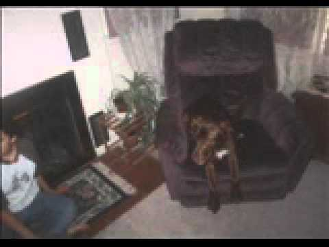 Mazzy - The best dog that ever was