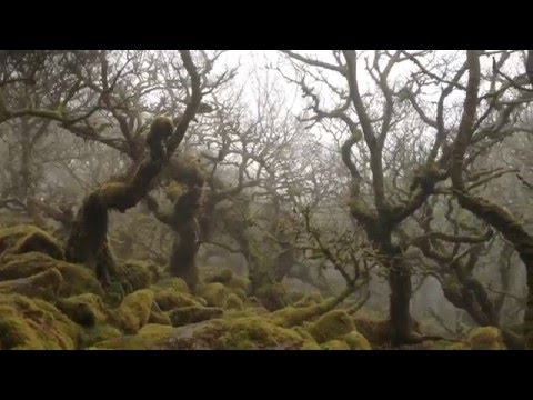 Wistman's Wood in the fog