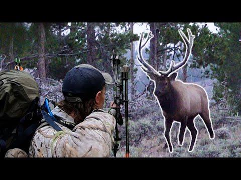 BULL RIGHT OFF THE ROAD?! – Colorado OTC Archery Elk Hunting