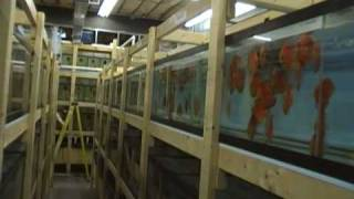 Fish house tour part 1 Discus Hans USA Baltimore Importer of Stendker Discus ~ Germany