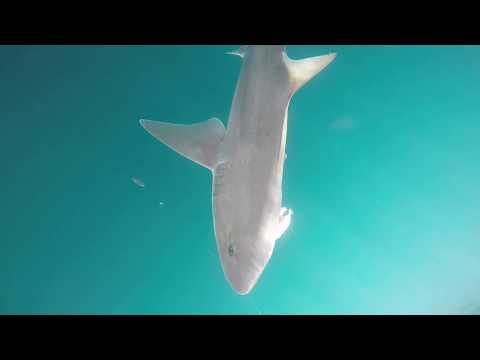 Gummy Shark Fishing With Salty Dog Charters Port Fairy
