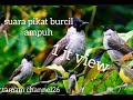 Suara Pikat Burcil  Mp3 - Mp4 Download