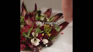 Red Chicory with Pomegranate and Beetroot