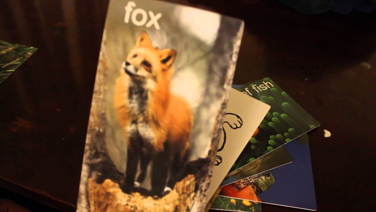 what does the fox say flash cards youtube
