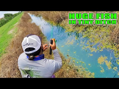 HUGE Fish In TINY Crystal Clear Ditch! Freshwater Fishing