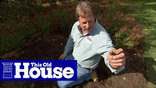 How to Plant Flower Bulbs - This Old House