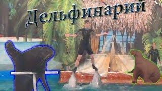 Дельфинарий. Самара. Два дельфина, морской котик, морж и белуха.
