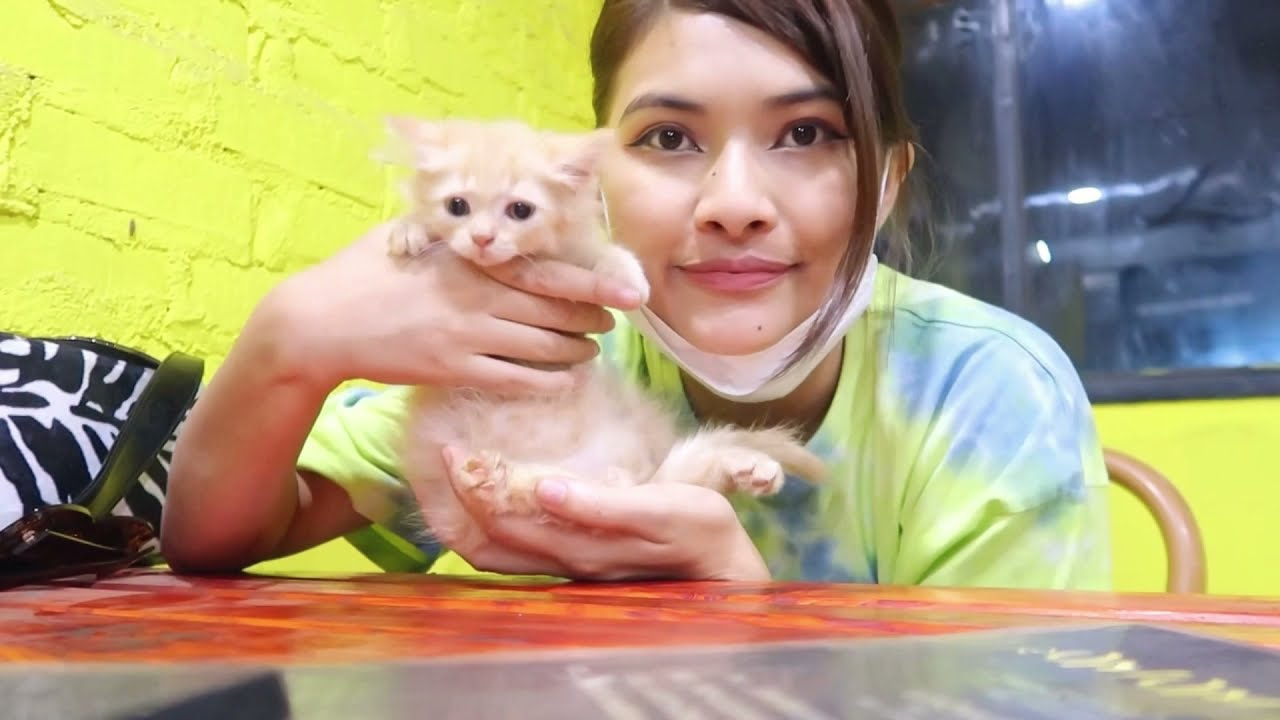 I GOT MY FIRST PET KITTEN 🐈 !!! Persian cat 🐱 // Prettyxoxo