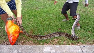 massive-snake-caught-while-fishing