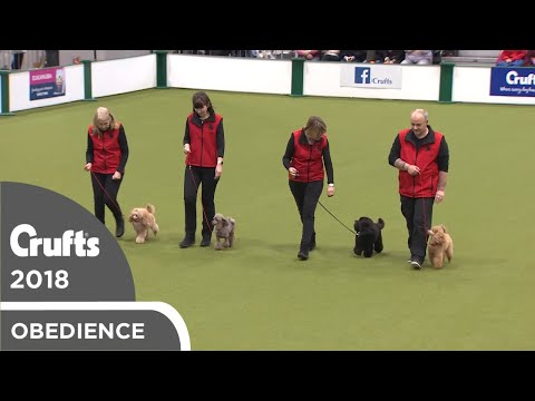 Obreedience - Poodle Training Club | Crufts 2018