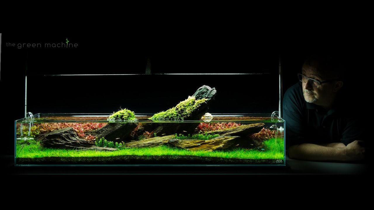 Aquarium Aquascape Tutorial Guide Crimson Sky By James