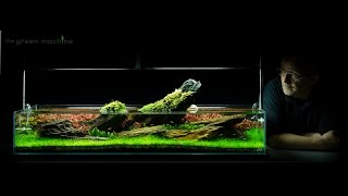 Crimson Sky Nature Aquarium Aquascape by James Findley
