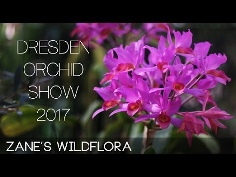 On The Go: Dresden Orchid Show Trip - Orchideenwelt 2017 - DAY 1
