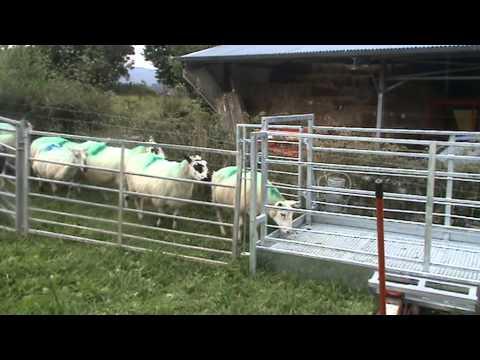 Prevent sheep lameness with new design footbath