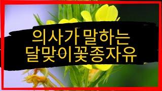 감마리놀렌산 부작용 (달맞이꽃조…