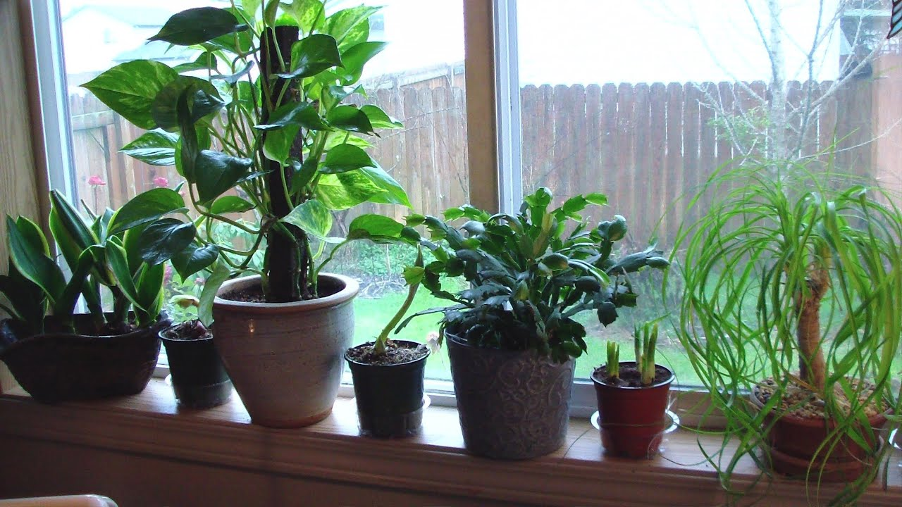 Houseplant Appreciation Day My Easy Houseplants With