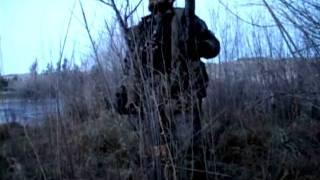 Охота на утку в кукурузе видео