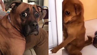 Guilty DOG Face Reaction  Funniest Guilty Dogs Video Compilation
