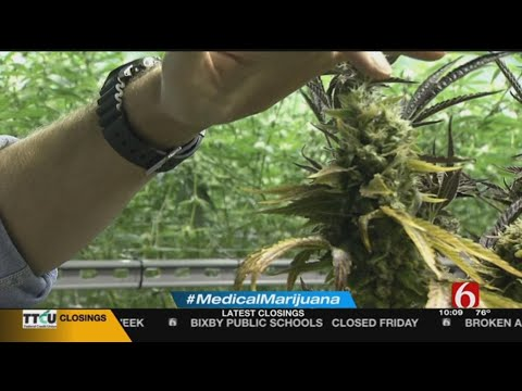 Medical Marijuana Could Bring Great Benefits, Challenges For Oklahoma