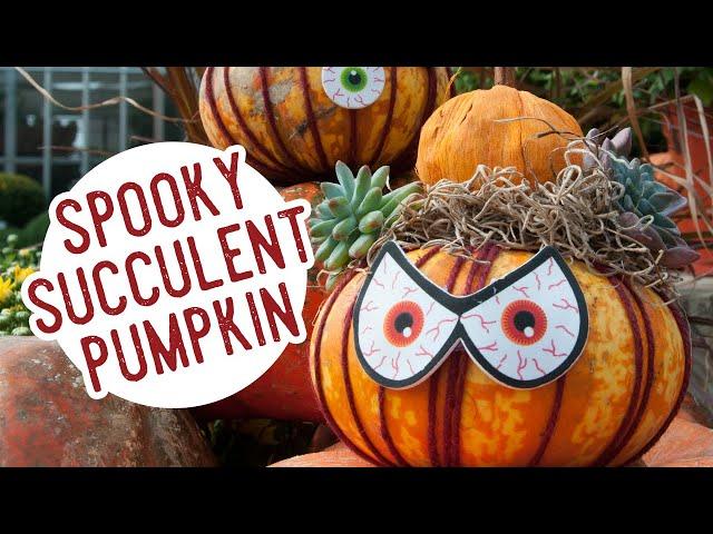 D.I.Y. Spooky Succulent Pumpkin
