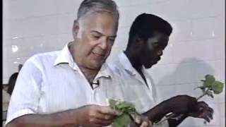 Rare Footage: Making Trinidad Habanero Hot Sauce