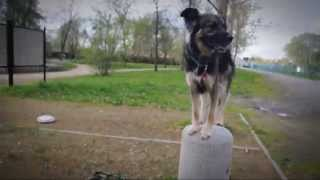 Mushu - The Recykling Dog.