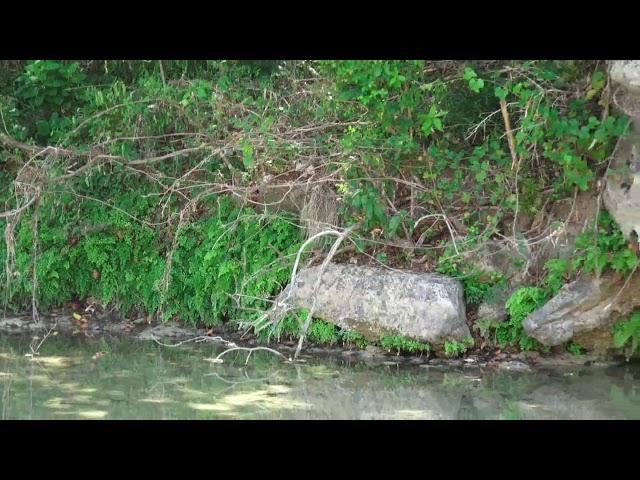 157 Darter Lane Dripping Springs, Texas 78620