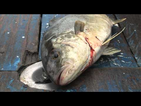 Save Our Seas: Fix The Common Fisheries Policy