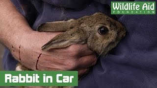Scared Bunny Rabbit Trapped in Car Engine for Hours