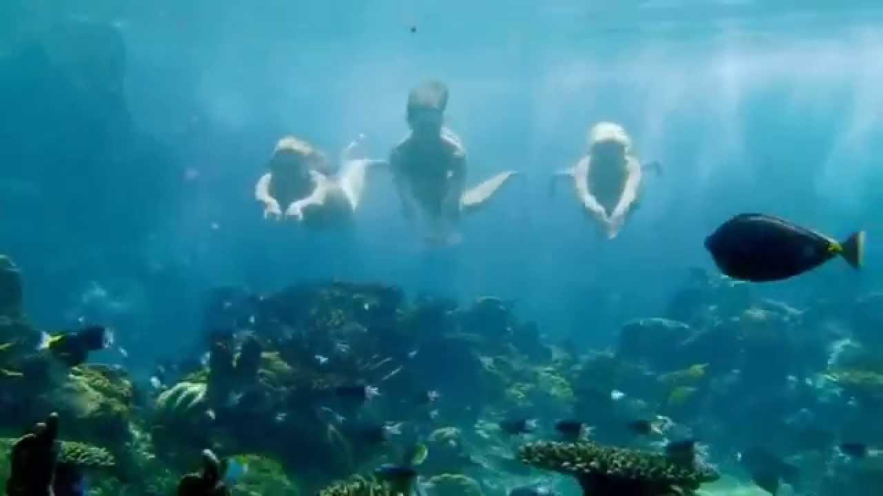 Mako mermaids season 1 opening youtube for Mako mermaids season 1 episode 20 dailymotion