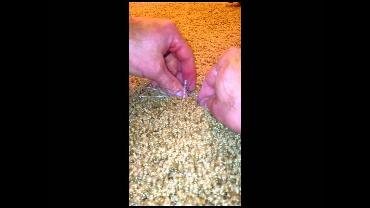 A How To Repair Carpet Fix Carpet With Pet Damage Or A