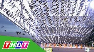 H. Hồng Ngự: Hàng ngàn chim én về trú ngụ ở nhà dân | THDT