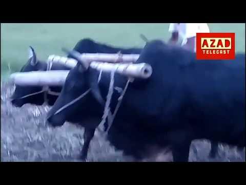|| Village made ,cow power || একটি গরুর গাড়ির মজার খেলা ||