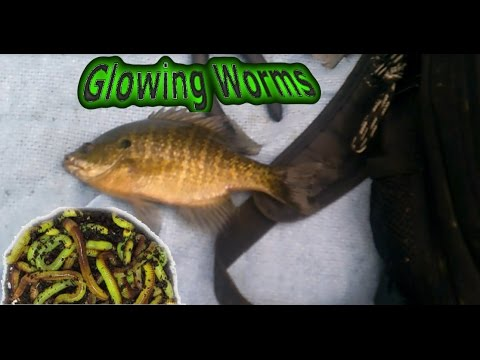Fishing With Glowing Worms