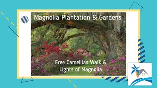 Magnolia Plantation and Gardens - Camellia Walks & Lights of Magnolia