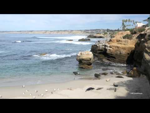 More seals on a sunny San Diego Beach in 4K resolution.