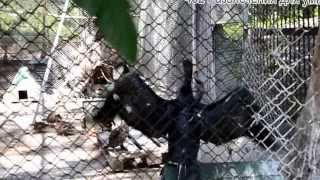 животные, куры, птицы, Харьковский Зоопарк
