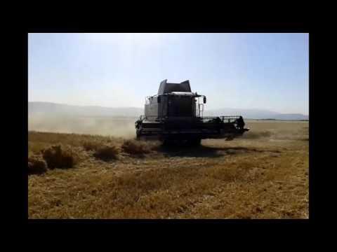 farming wheat at Greece
