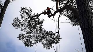 Wycinka drzew trudnych w gęstej zabudowie 2018