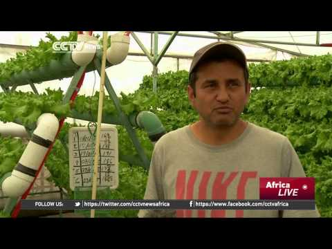 Mexico City: Urban farming on the Increase Despite Pollution