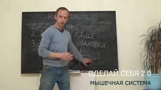 Анатомия человека Лекция 01 – роль мышечной системы