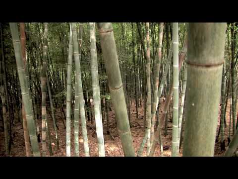 Bamboo Revolution & Bamboo Valley Begin Growing Bamboo for T